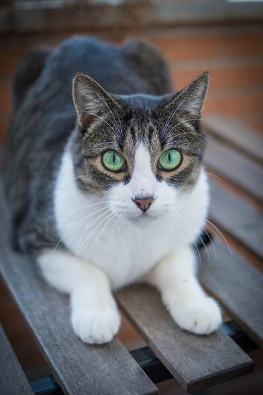 cat-2603300_1920